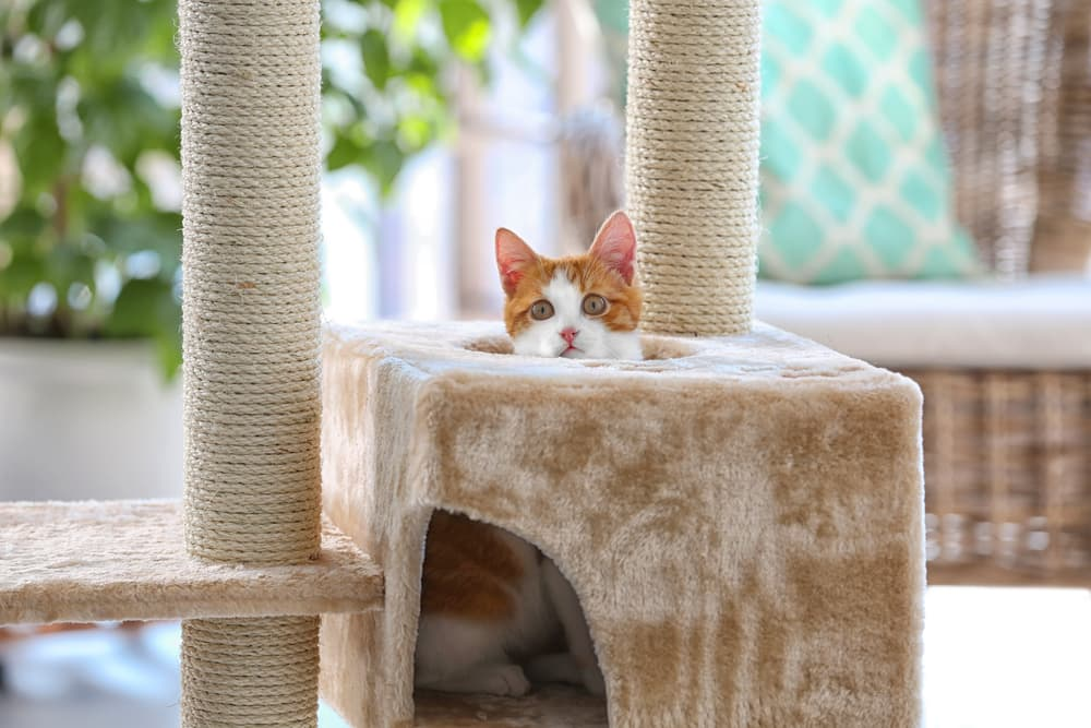 cat in a cat condo