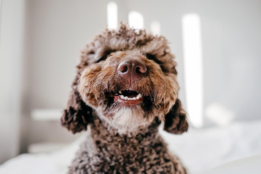 happy dog smiling