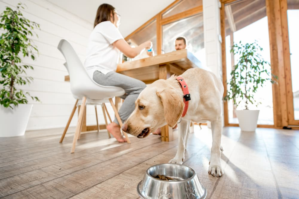 dog eating from bowl