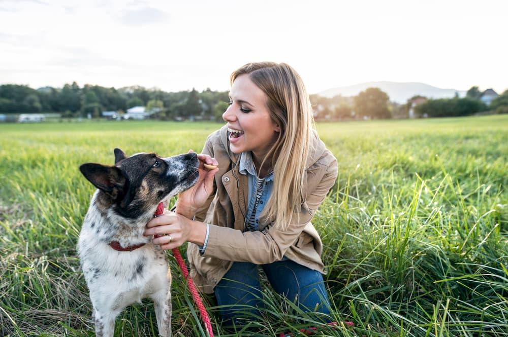 8 Manieren om Je Hond Veilig Te Houden bij Social Distancing Tijdens de Coronavirus Pandemie