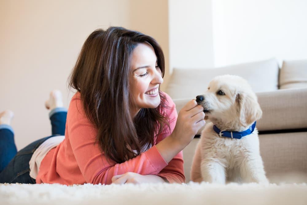 New Puppy Checklist: 16 Essential Items