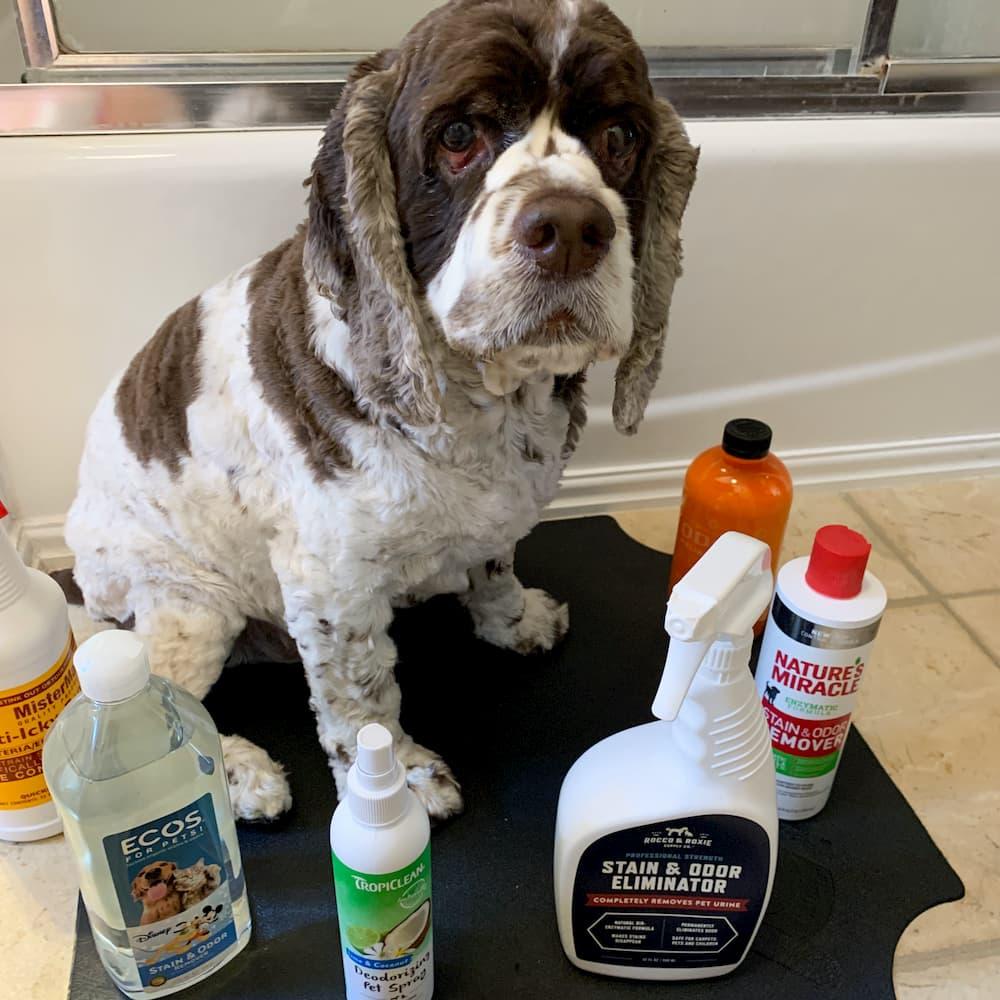 Dog surrounded by pet odor eliminators