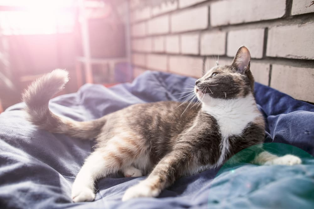 Cat relaxed on bed
