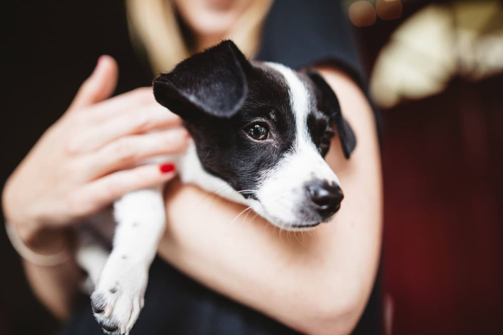 Woman holding puppy in arms