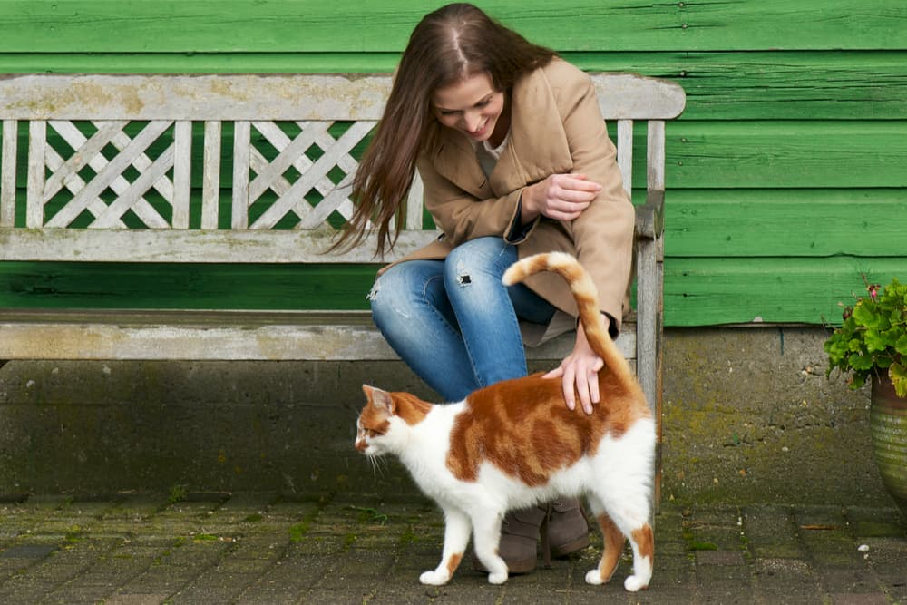 Owner petting cat with alert tail