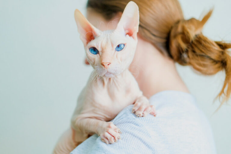 Woman holding a hairless cat