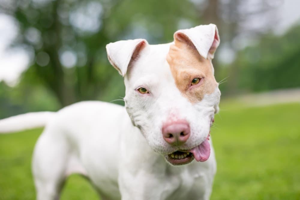 Dog looking at camera with tongue hanging out