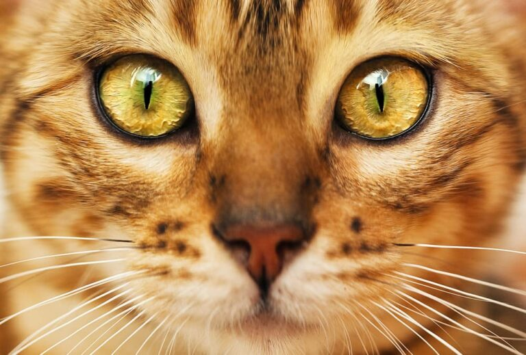 Cat with big eyes and whiskers