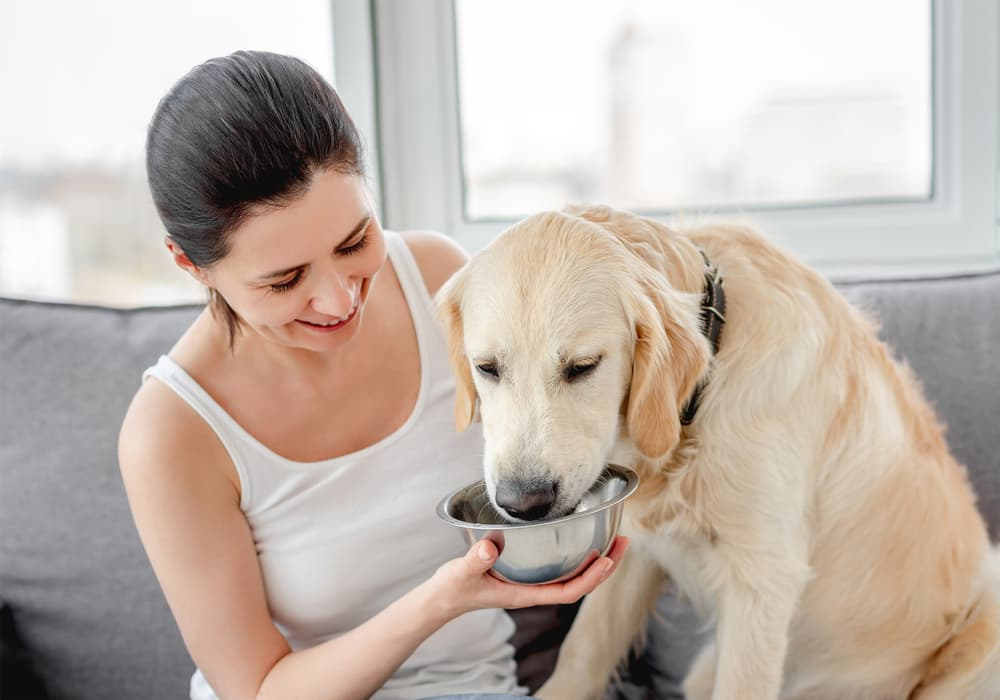 Woman giving dog pedialyte drink