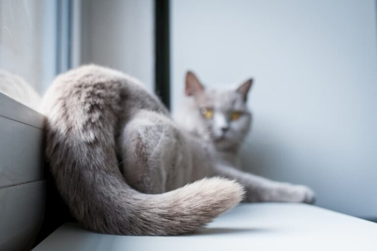 Close-up of a cats tail while laying on window sill