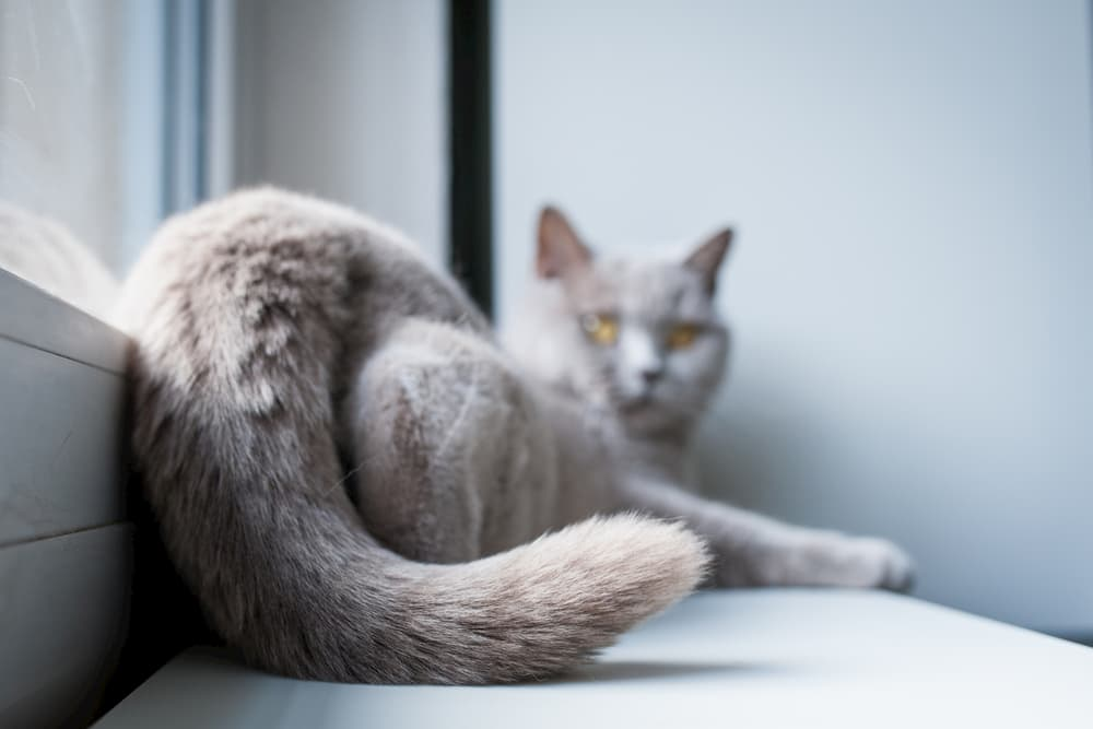 Does Your Cat Love You? 11 Ways to Tell