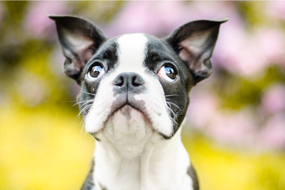 Dog looking up with wide open eyes