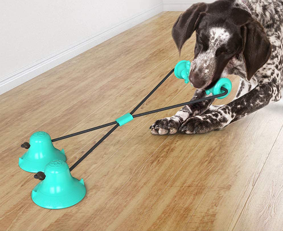 dog playing with blue suction-cup toy