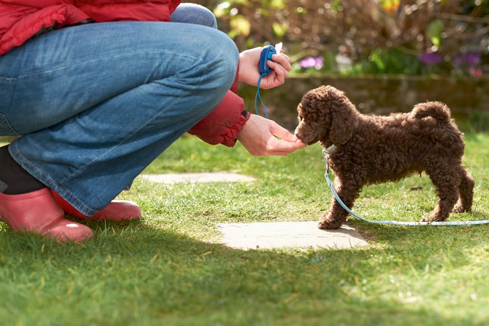 How to Train a Puppy to Come