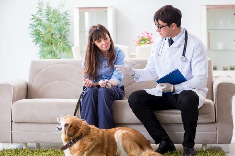 vet visiting Golden Retriever at home