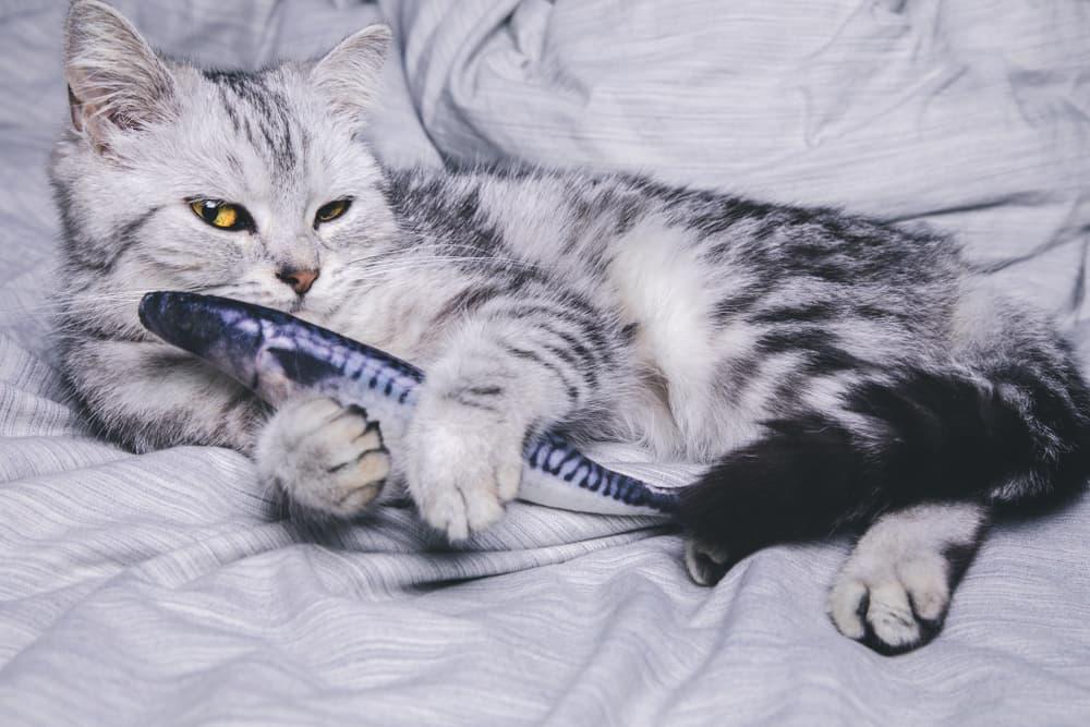 6 Best Cat Kicker Fish Toys