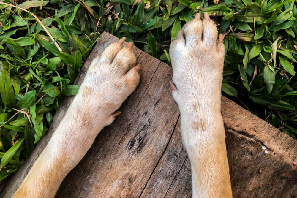 Close up of dog's paws outdoors on a bench