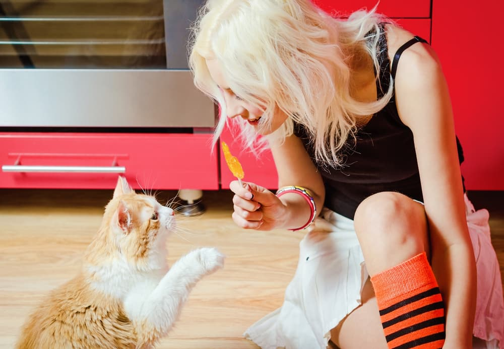 Cat pawing at lollipop