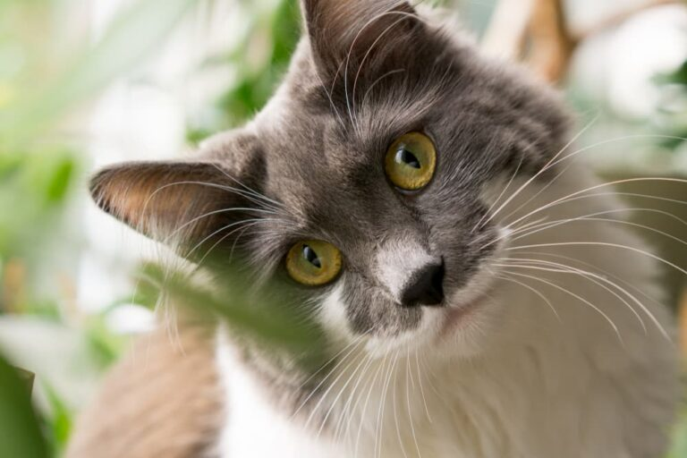 Cat with head tilted looking at camera
