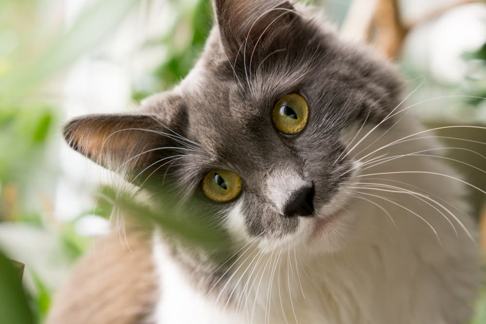 Your Cat's Brain: 11 Crazy Facts You Didn't Know