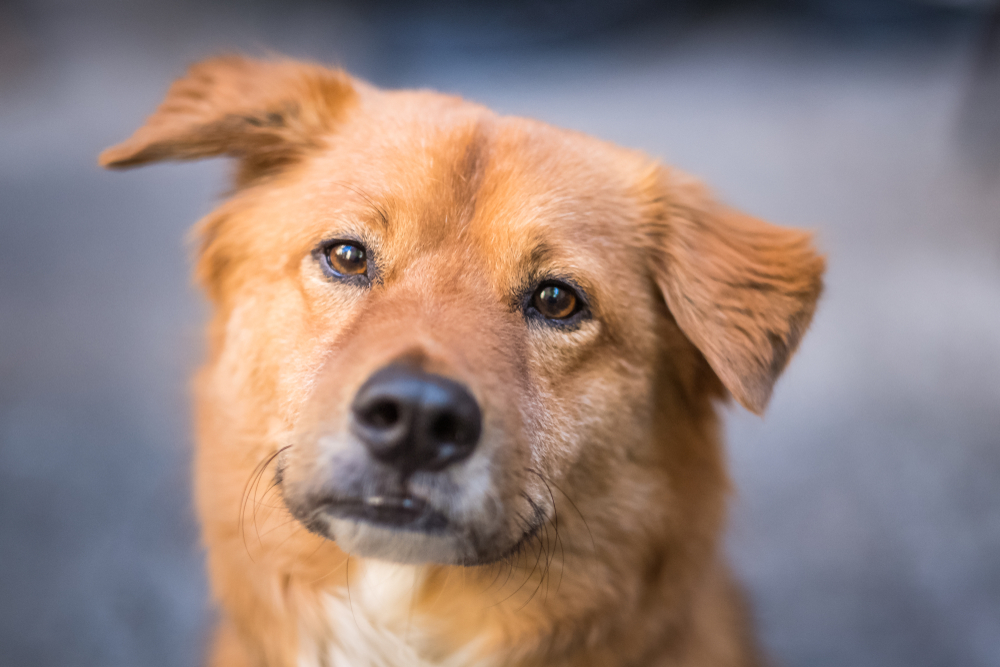 Dog with titled head