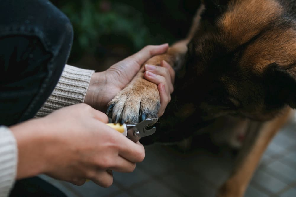 Woman trimming nails of a dog