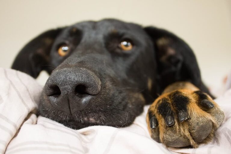 Close up of dog's face and his paw