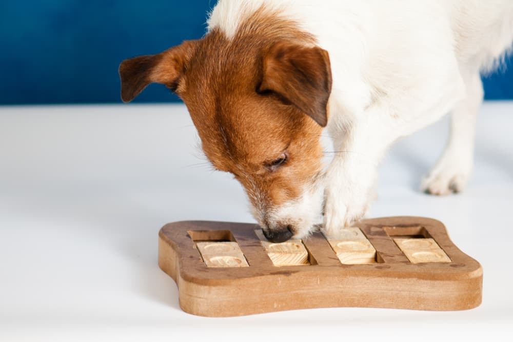 Dog with food toy puzzle