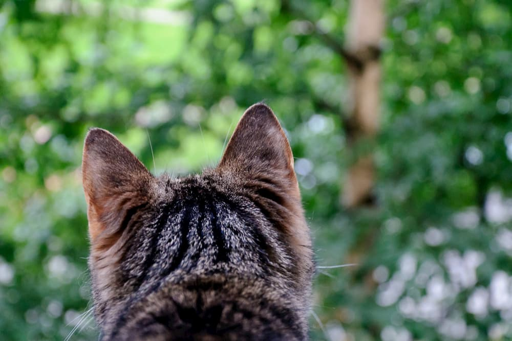 Back of cat's head outdoors