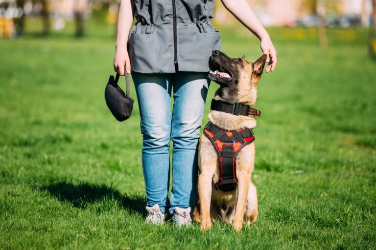 Dog sitting with trainer outdoors