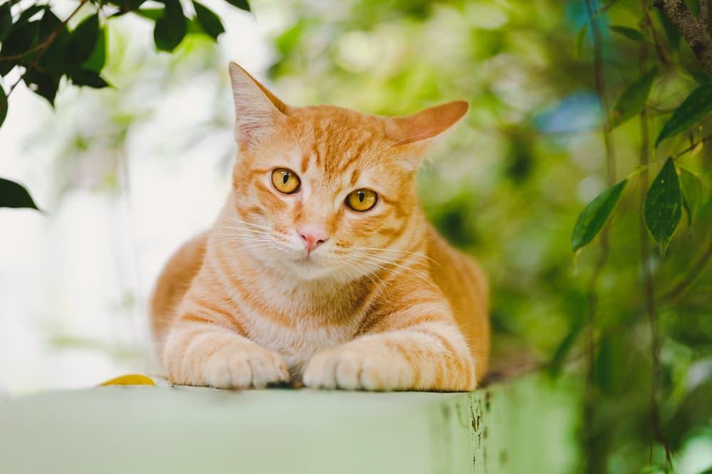 Orange cat outside on wall