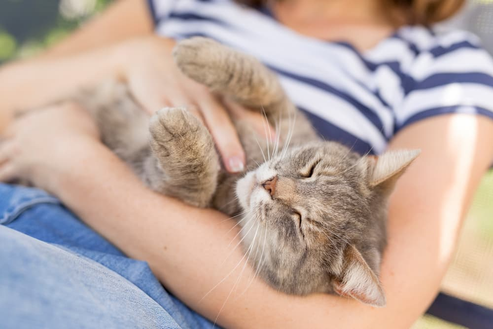 Cat cuddling with owner