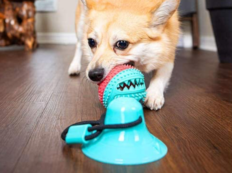 5 Fun Suction-Cup Dog Toys to Keep Canines Busy