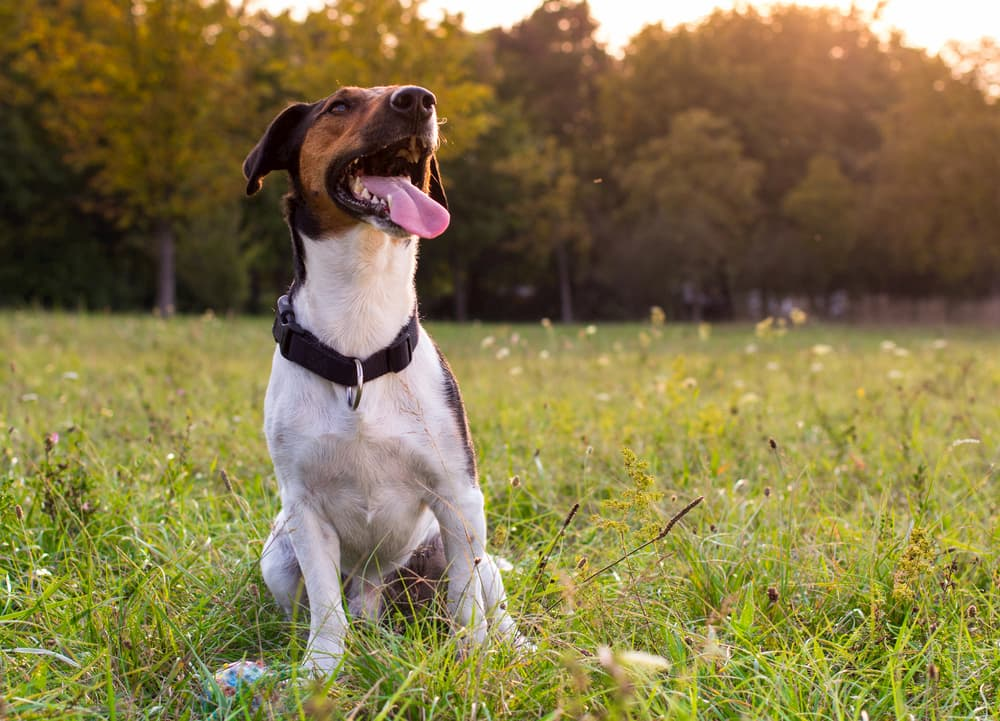 7 Summer Safety Reminders for Dog Owners