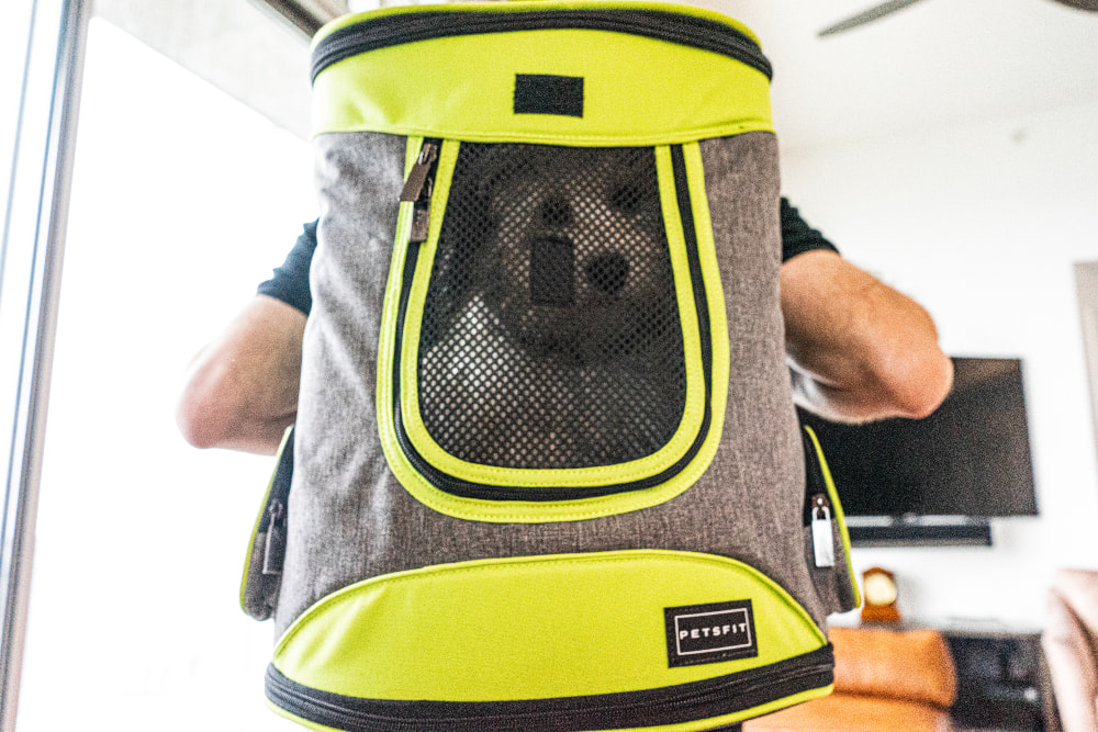 Dog in a backpack carrier