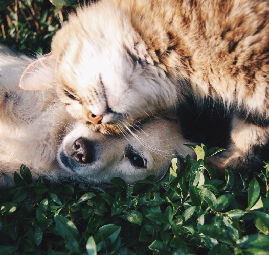 Naming your new pet is a big step—so don't let information overload get you down!