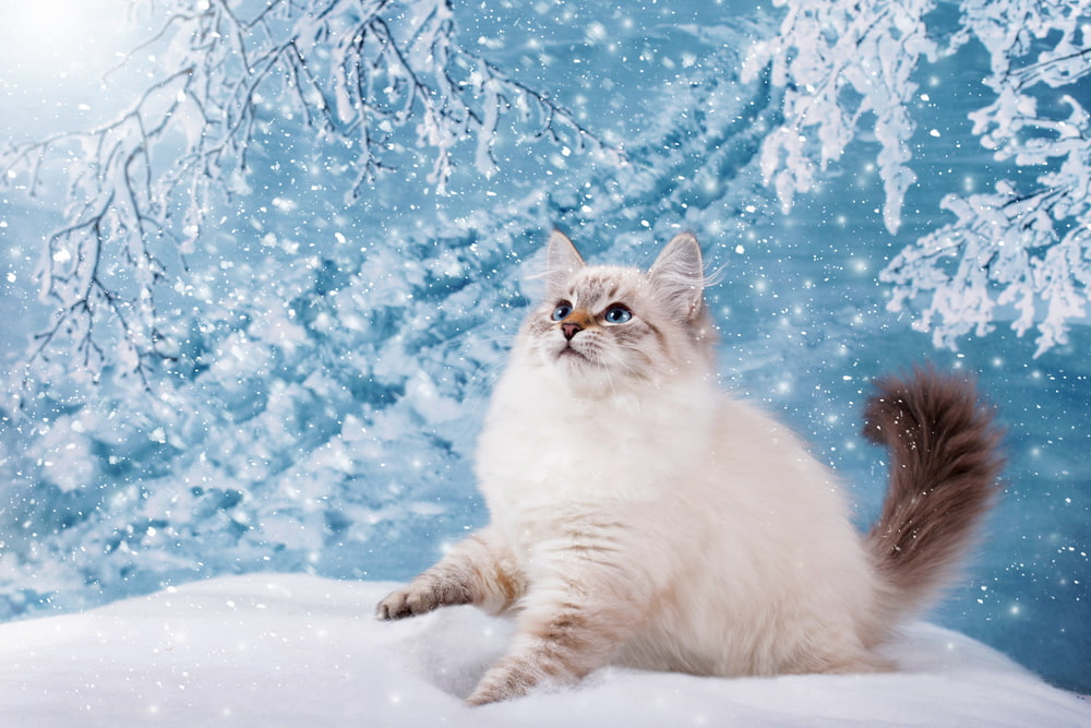 49 Disney Cat Names for Your Fairytale Feline