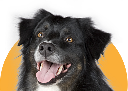 Bringing home a new dog or cat is exciting! Research breeds, browse pet names, and get advice for welcoming your newest family member.