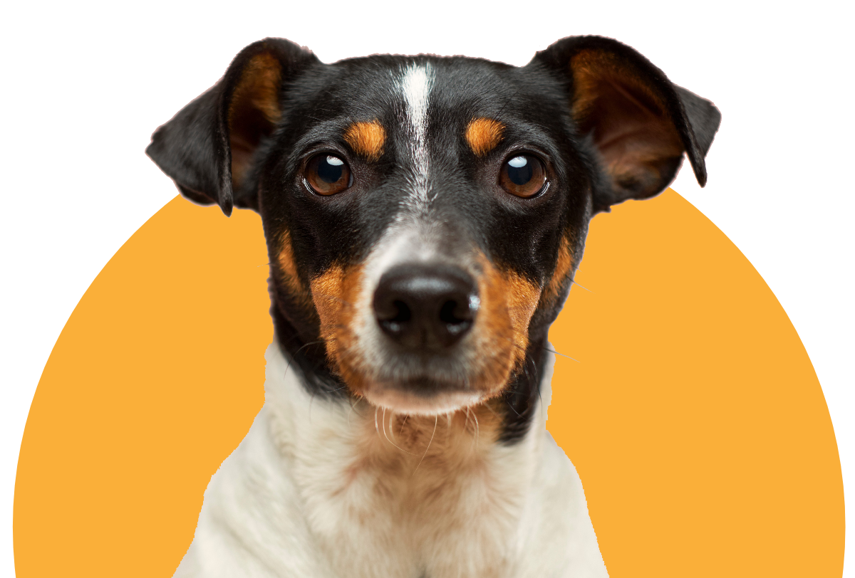 Our product specialists know pets. Find the best in food, treats, gear, toys, and more.