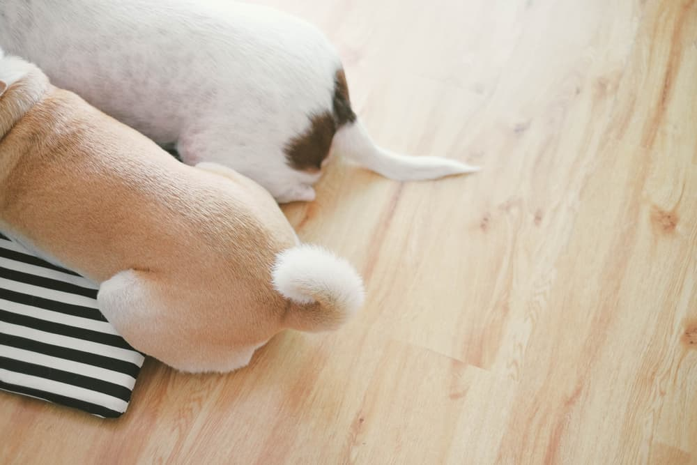 Close up of two dogs tails