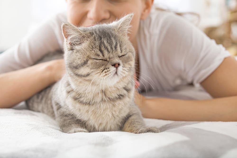 cat cuddling with pet parent