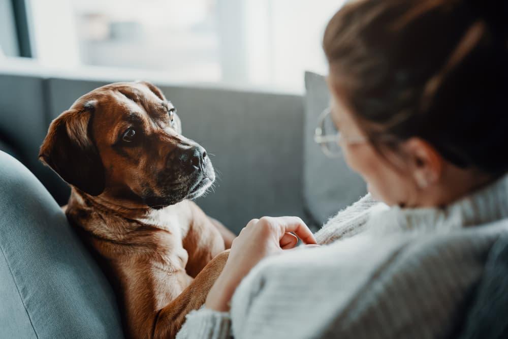 Woman looking at sick dog