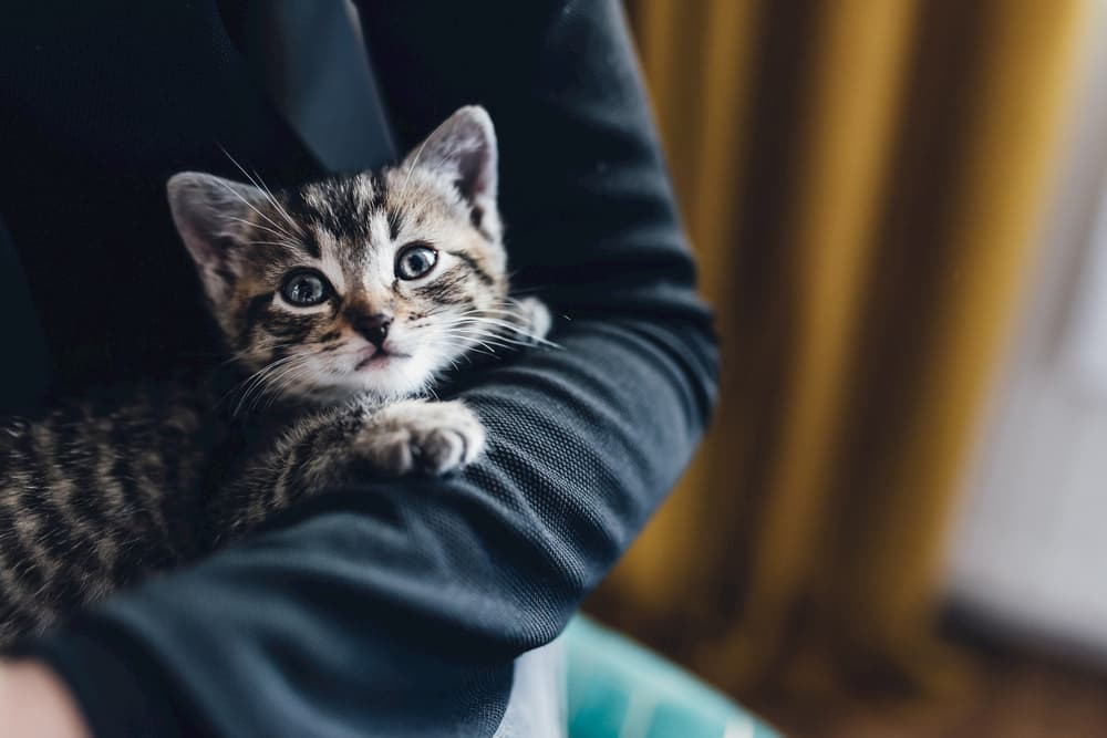 Cat looking a little scared being held by owner