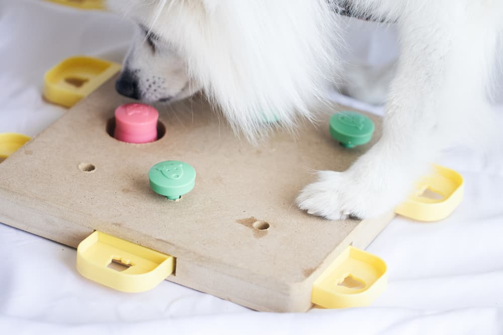 Dog playing with intelligence toy