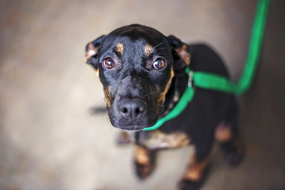Fearful rescue dog looking at camera