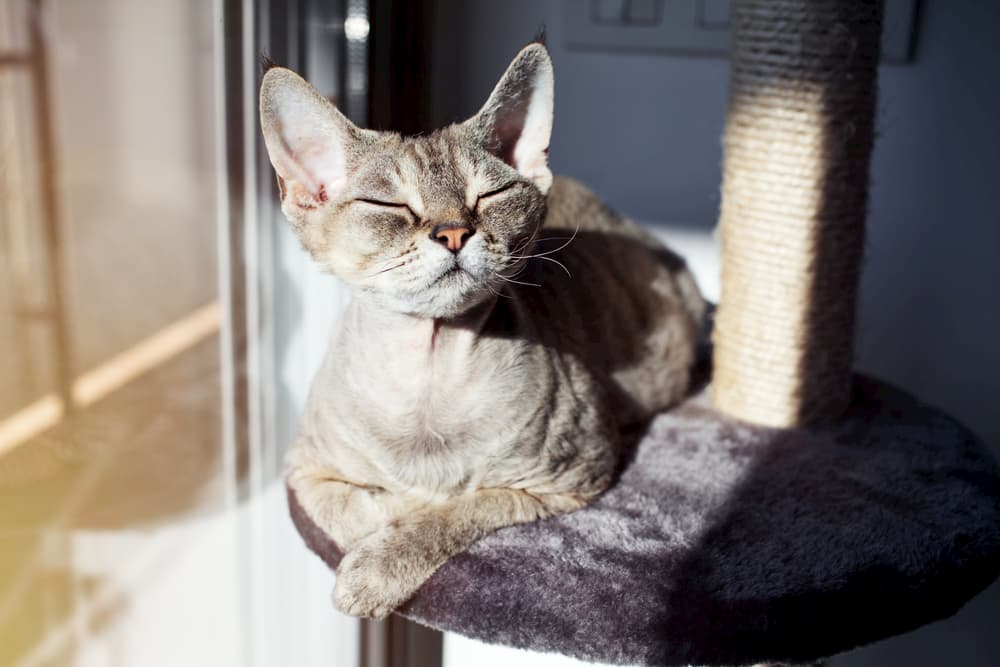 Cat perched on a cat tree happy in the sunlight