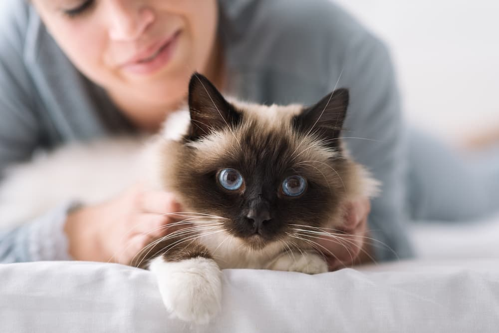 Cat laying on a bed with owner