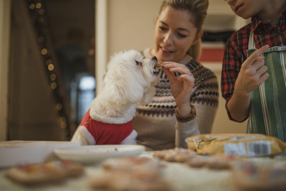 Woman baking pumpkin dog treats