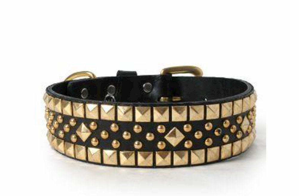 Black dog collar with gold studs