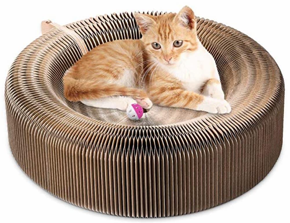 cat laying in cat scratcher